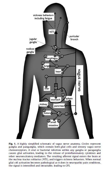 Valaciclovir - Doctissimo